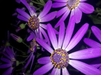 purple flowers final 1